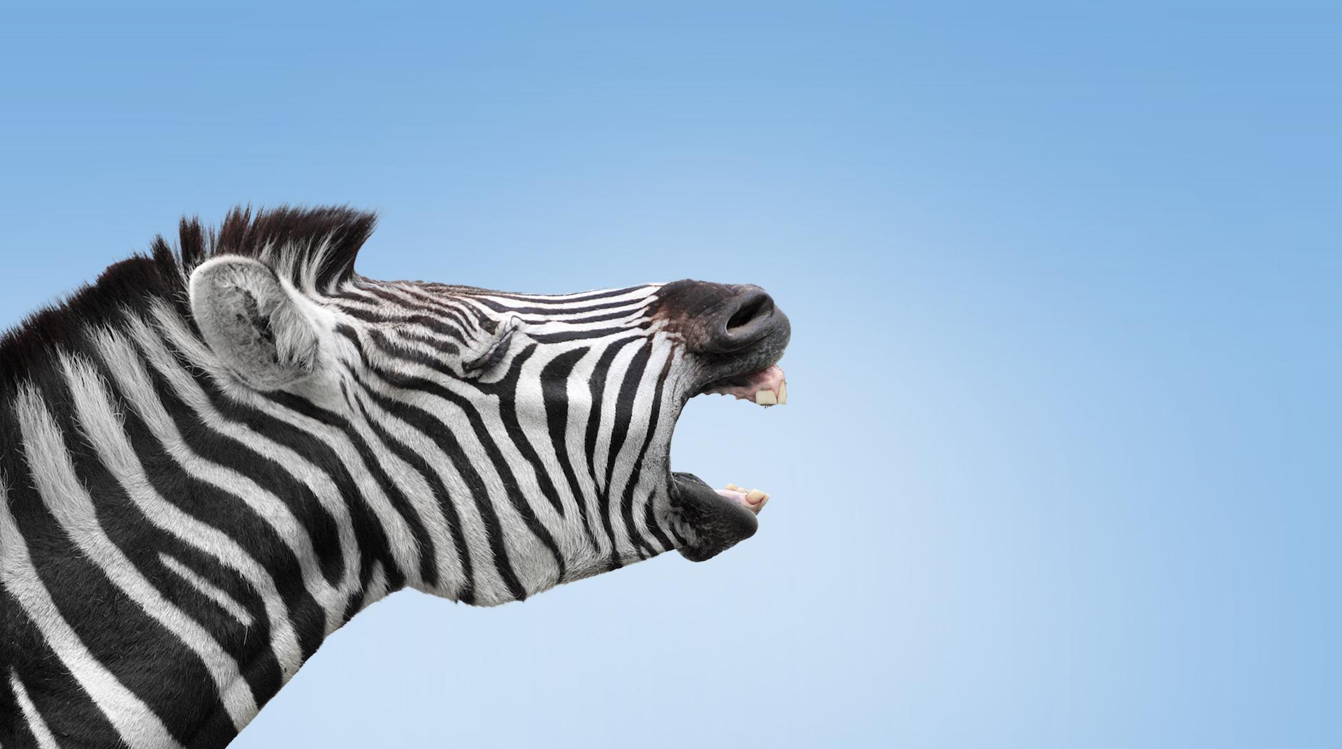 BN_zebra_Home_1