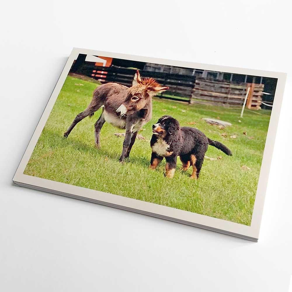 Cartoline dogs & C.