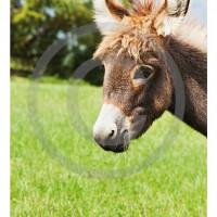 Cartoline-animali_7