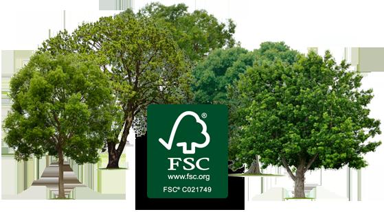 La carta eco-sostenibile